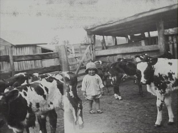 Jim at 2-3 years of age in a yard with cows at Denbigh, 1925. Copyright: Camden Historical Society.